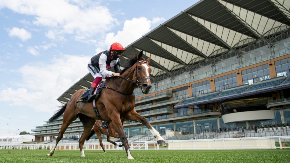 Champions Day betting – get the value with VBET
