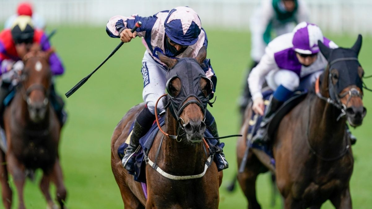 Royal first for Hammer Hansen as Coeur De Lion strikes in Ascot Stakes