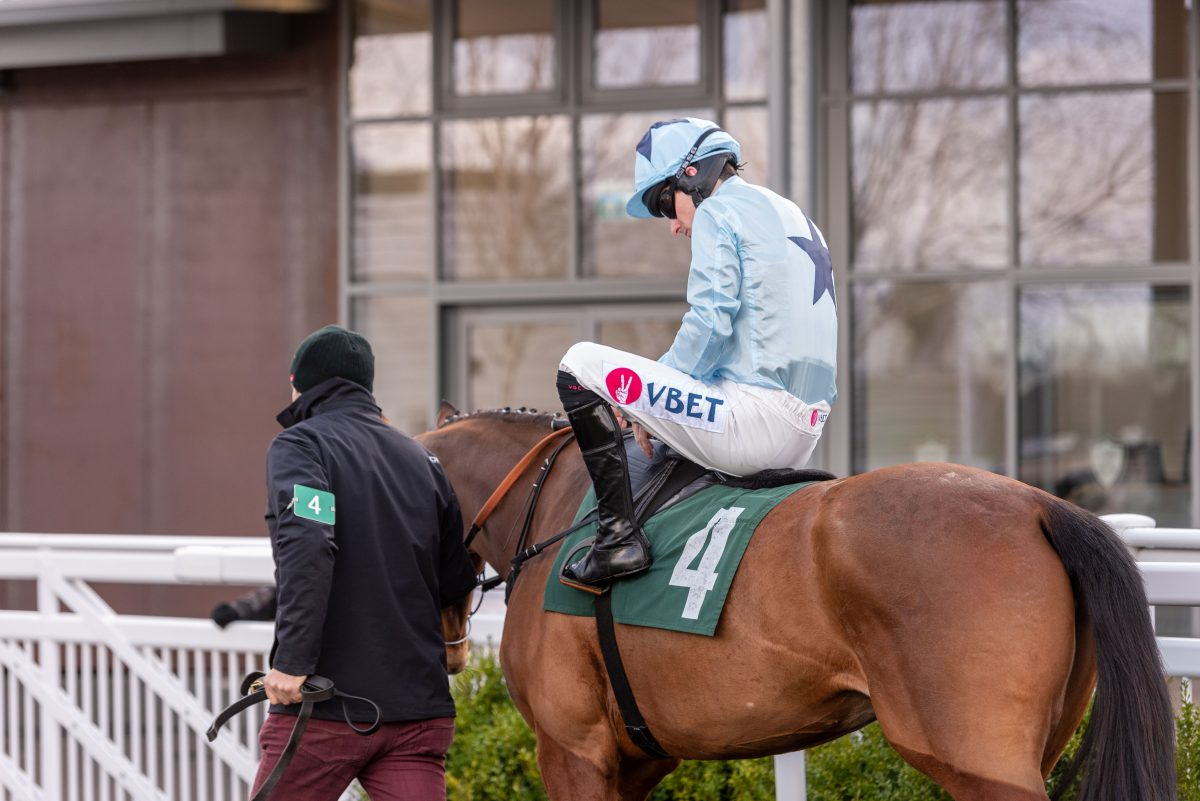 Read Brian Hughes on his quest for Cheltenham glory